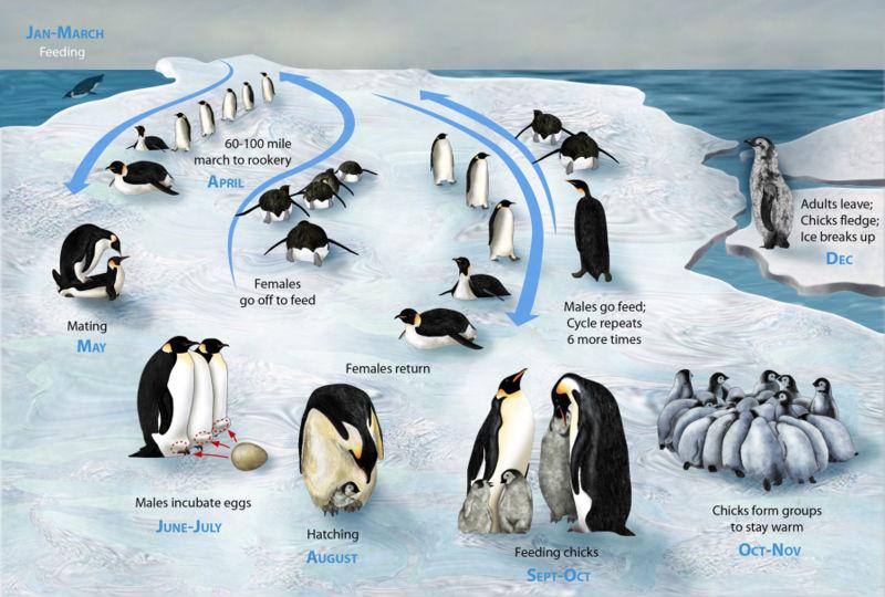 Penguin Information