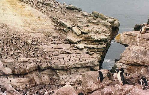 Penguins Pictures Picture Penguin Habitat